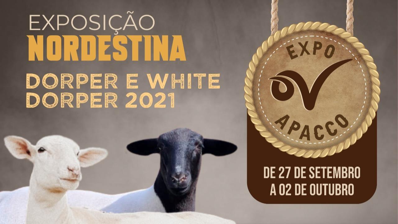Confira a programação para a Expo Nordestina Dorper e White Dorper 2021